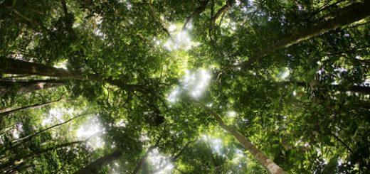دیاکسید کربن تولید شده به واسطه نابودی جنگلهای استوایی معادل یک ششم از کل دیاکسید کربن تولید شده در جهان است