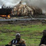 اوهورو کنیاتا رئیس جمهوری کنیا گفت ما دیگر آن آفریقایی نیستیم که بیخیال فیلها شویم