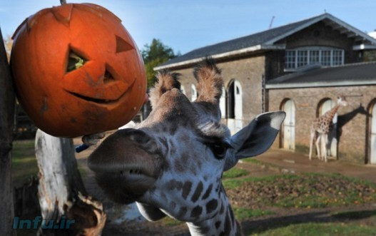 بیش از ۶۰۰ گونه حیوانی در باغ وحش لندن زندگی می کنند