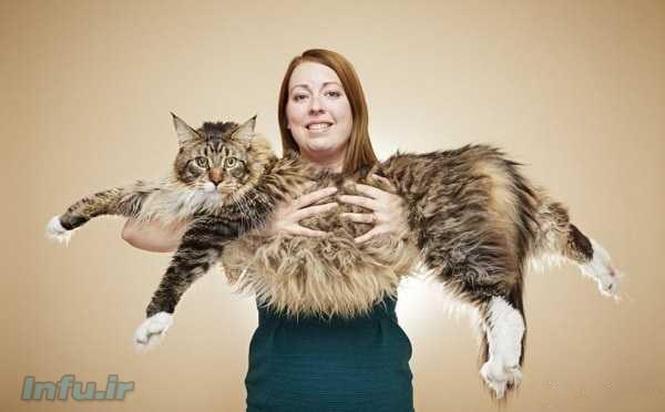 بزرگترین گربهرکورد گینس