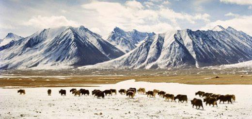 ۹۳ درصد تاجیکستان را کوهستانهای مرتفع و مملوء از یخچالهای طبیعی پوشانده که تا سال ۲۰۵۰ حدود ۳۰ درصد از آنها آب میشود