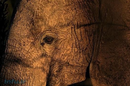 یک فیل در پارک حیات وحش تانزانیا/ عکس از afp