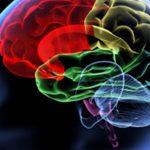 تواناییهای مغز