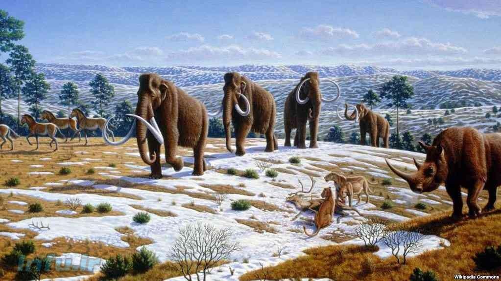 نسل ماموتهای پشمالو چهار هزار سال قبل منقرض شده است