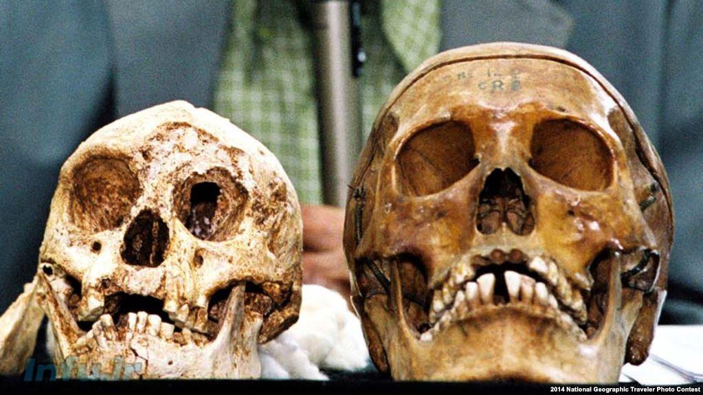 جمجمه سمت چپ متعلق به کوتولههای اندونزی است و جمجمه سمت راست متعلق به انسانهای کنونی.