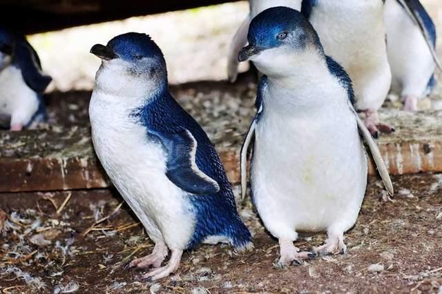 حیوانات استرالیایی