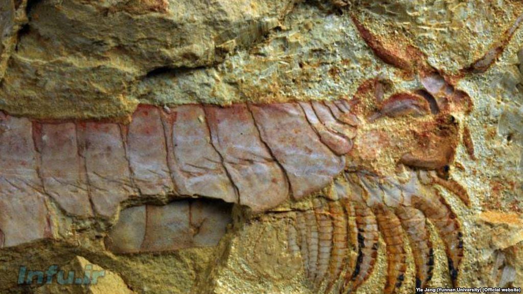 فسیل کشف شده در چین