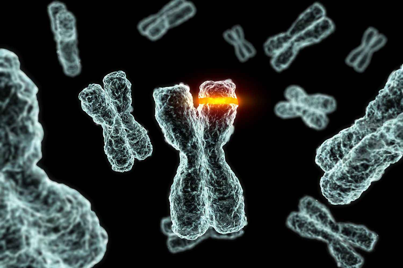 کروموزم / Chromosome