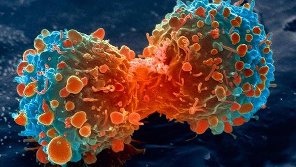 یک سلول سرطانی ریه در حال تقسیم