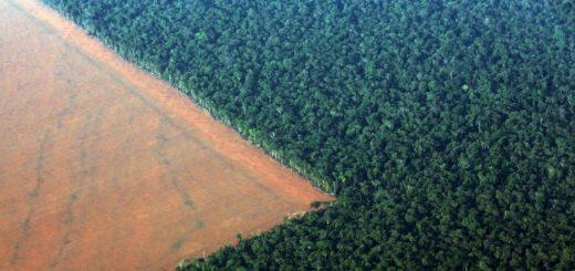 جنگلزدایی در آمازون برای کشت سویا. غرب برزیل چهارم اکتبر ۲۰۱۵