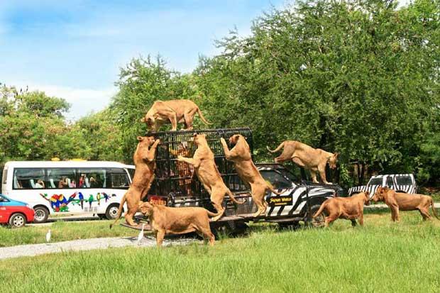 دیدنیهای تور بانکوک,سافاری دنیای وحش بانکوک