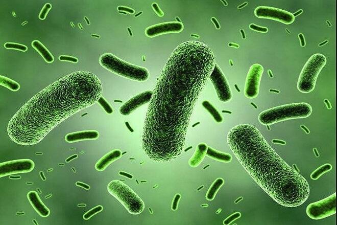 دانشمندان آمریکایی خانواده تازه ای از آنتی بیوتیک ها را در نمونه های خاک پیدا کرده اند