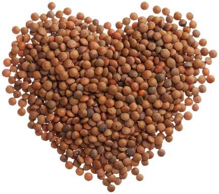 عدس برای سلامت قلب lentil-love