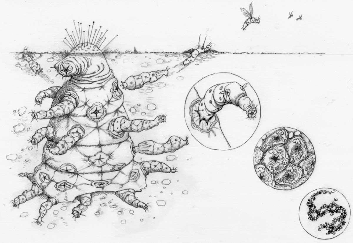 زیست فرازمینی / Extraterrestrial life