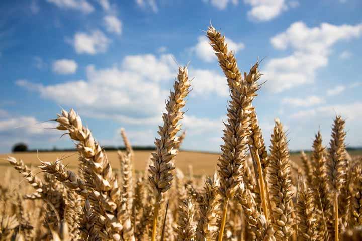 مواد غذایی اصلاح ژنتیکی