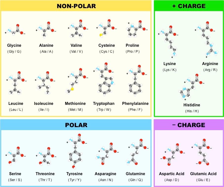 آمینو اسید ها