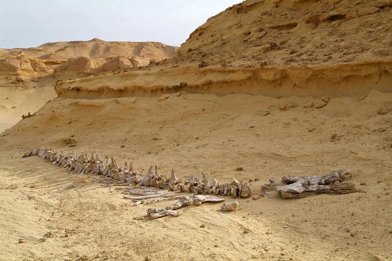 وادی الحیتان گورستان وال ها