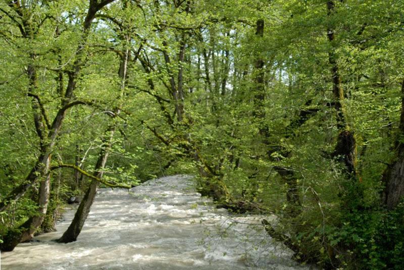 پارک جنگلی سه هزار