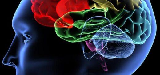 ما فقط از ۱۰% مغزمان استفاده می کنیم