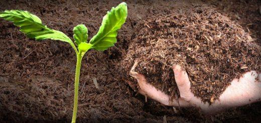 ساخت کود گیاهی در خانه با استفاده از پسماندهای میوه و سبزیجات