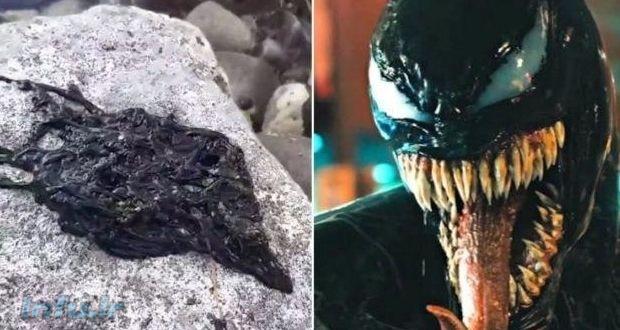 ونوم (Venom